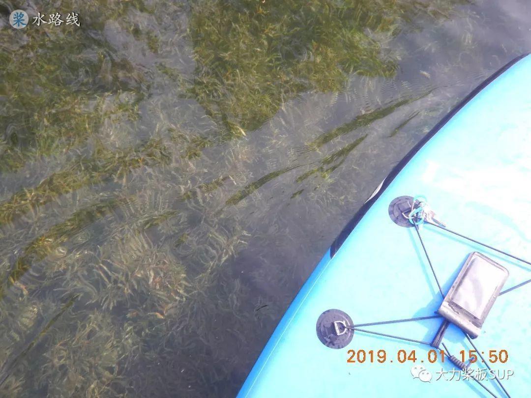 水路线 -2019-4-1 周一,(北京·重庆·辽宁·山东·广西)SUP桨板·精彩视频·照片集锦!