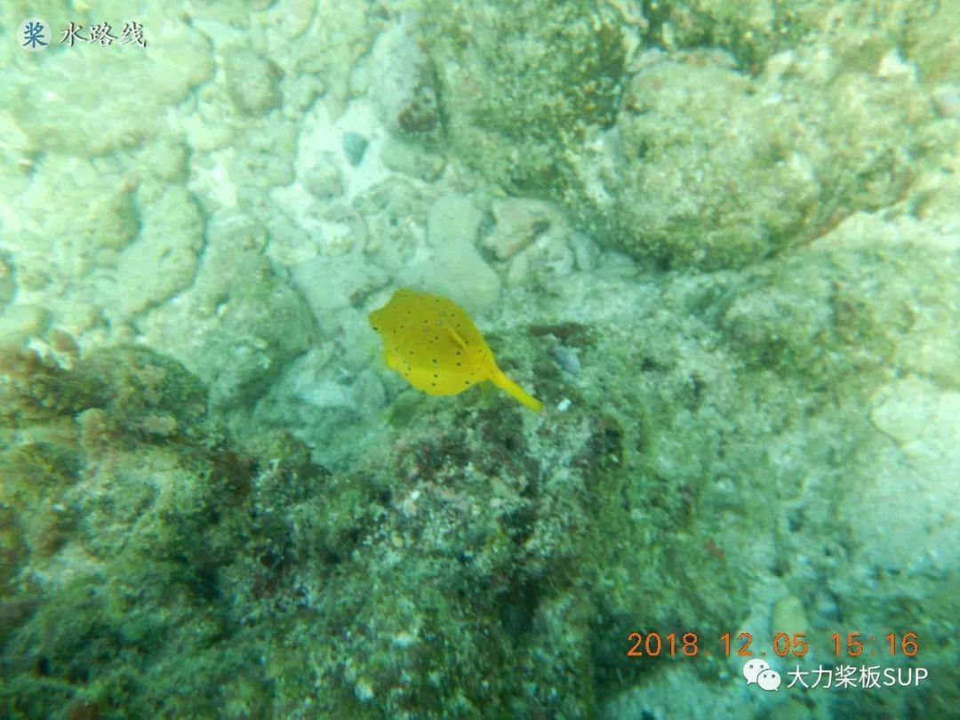 水路线 -大力桨板-海南·石梅湾·加井岛·SUP桨板指南